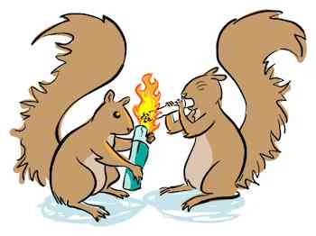Squirrels Cause Forest Fires
